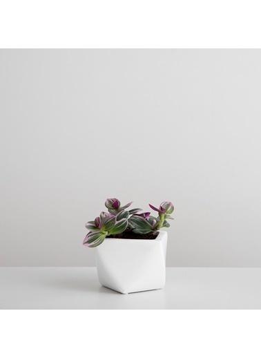 Chakra Zemare Saksı S 13,5x13,5x9 cm Beyaz Beyaz